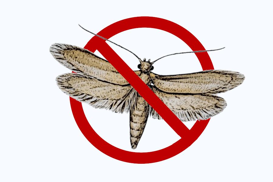 Kleidermotte bekämpfen - Mottenmittel und Mottenfallen
